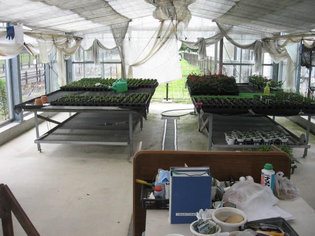 富浜緑地温室の様子H28.8.23_d0338682_14572498.jpg