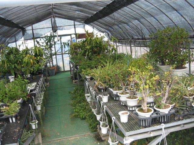 富浜緑地温室の様子H28.8.23_d0338682_14575128.jpg