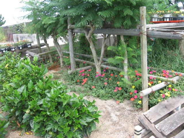 富浜緑地温室の様子H28.8.23_d0338682_14581917.jpg