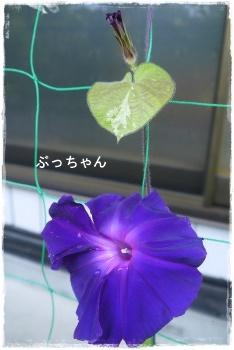f0353990_16443611.jpg