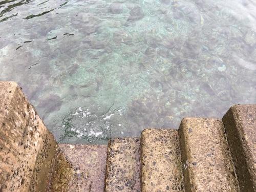 8月22日釣りと体験ダイビング\(^o^)/_d0114397_10185091.jpeg