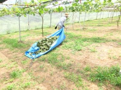 葡萄の葉っぱ_d0336530_16581901.jpg