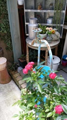 庭のこと_e0086738_13054388.jpg