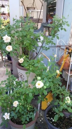 庭のこと_e0086738_13054630.jpg