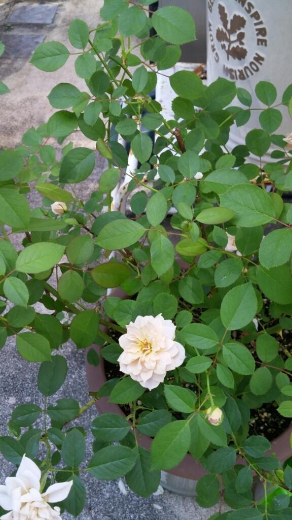 庭のこと_e0086738_13054823.jpg
