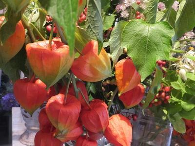 オークリーフ(秋色紫陽花とリーベンウォルシー)_f0049672_17121651.jpg