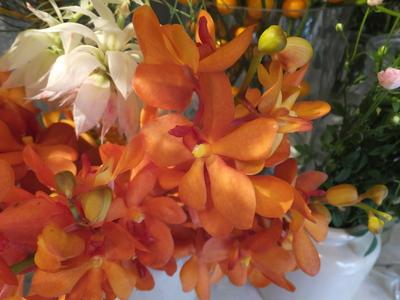 オークリーフ(秋色紫陽花とリーベンウォルシー)_f0049672_1712373.jpg