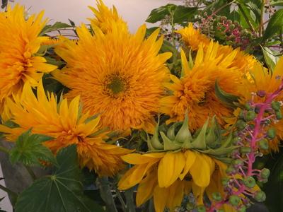 オークリーフ(秋色紫陽花とリーベンウォルシー)_f0049672_17125554.jpg