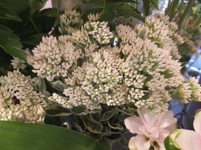 オークリーフ(秋色紫陽花とリーベンウォルシー)_f0049672_17131710.jpg
