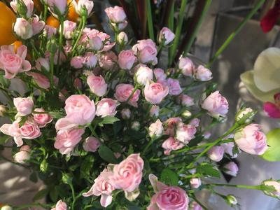 オークリーフ(秋色紫陽花とリーベンウォルシー)_f0049672_17143081.jpg