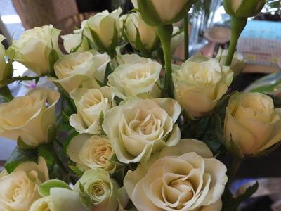 オークリーフ(秋色紫陽花とリーベンウォルシー)_f0049672_17143948.jpg
