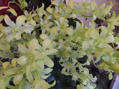 オークリーフ(秋色紫陽花とリーベンウォルシー)_f0049672_17145412.jpg