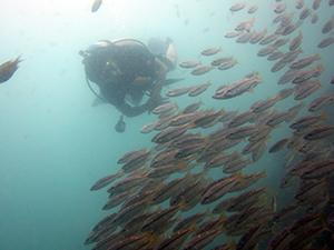 魚影はやっぱり_f0144385_20550518.jpg
