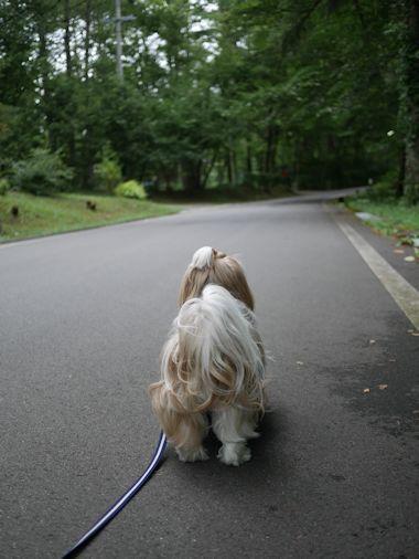 やっとお散歩出来たのに・・・_c0090198_2031957.jpg