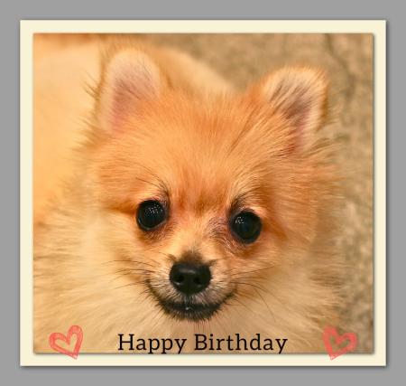 Happy Birthday♡チョコちゃん_d0060413_19170610.jpg