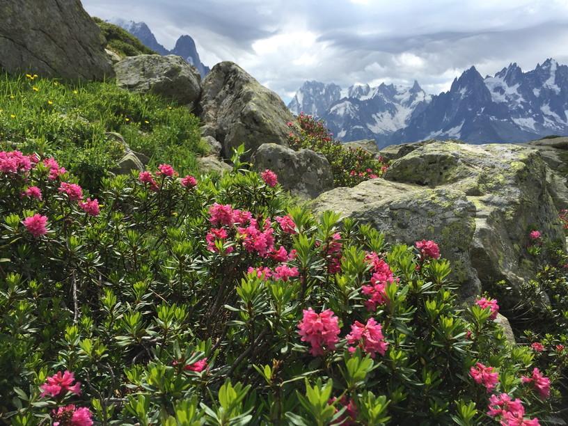 """2016年8月 『アルプスの女王、モンブラン』 August 2016 \""""Queen of the Alps, Mont Blanc\""""_c0219616_18303698.jpg"""