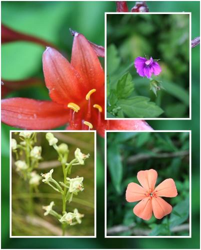 f0193521_8172142.jpg