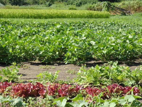 まめつぶ農園2016 Vol.11あっという間にまもなく実りの秋_b0206037_18431002.jpg