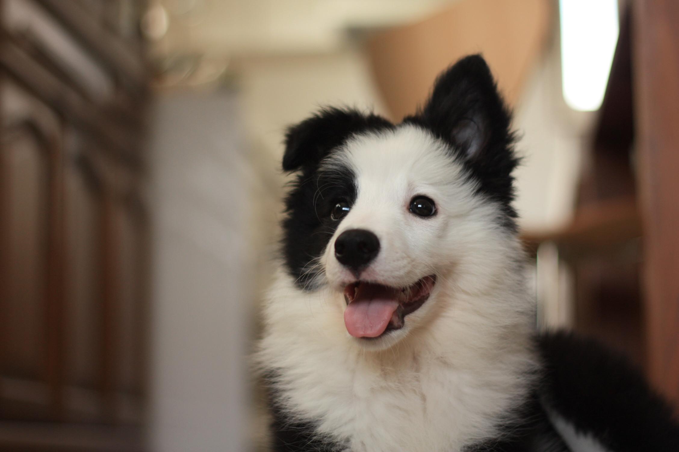 「犬の社会化」を考える_b0174042_16414571.jpg