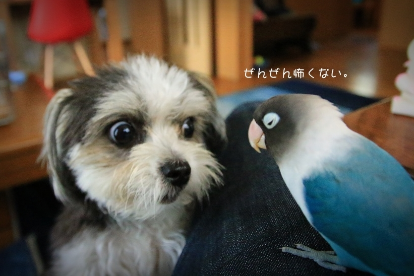 B.B & Chipo* フギャッ!!!でも、ニコニコ~~ ^^ _c0145250_09415959.jpg