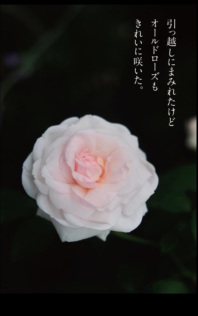 a0358016_11485790.jpg