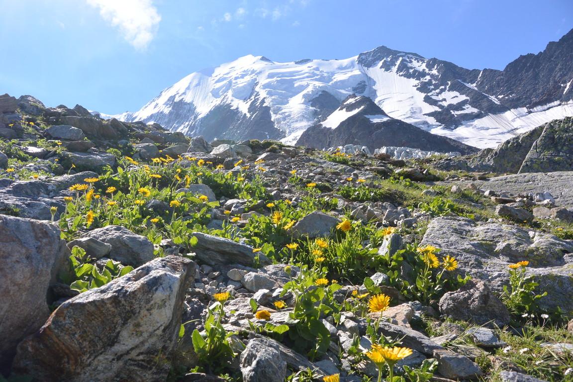"""2016年8月 『アルプスの女王、モンブラン』 August 2016 \""""Queen of the Alps, Mont Blanc\""""_c0219616_23403096.jpg"""