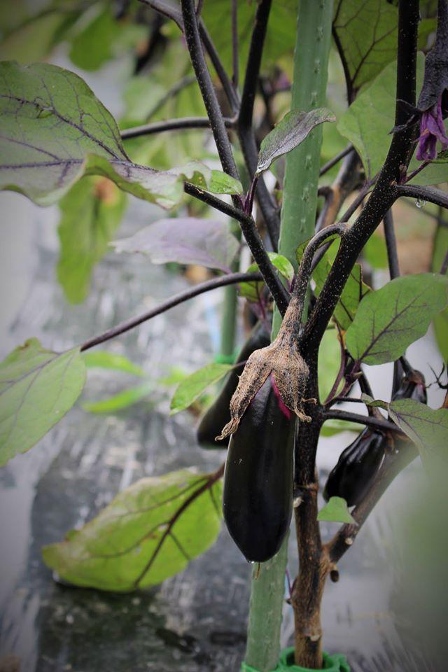 第3242回 野菜を食べて風邪を治したい。_f0366424_14254181.jpg