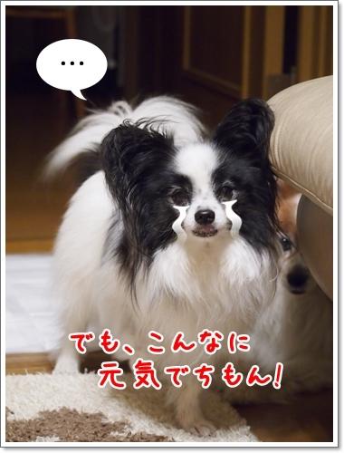d0013149_00133616.jpg