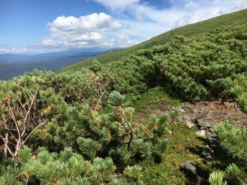 望岳台から雲の平へ_e0326953_12291256.jpg