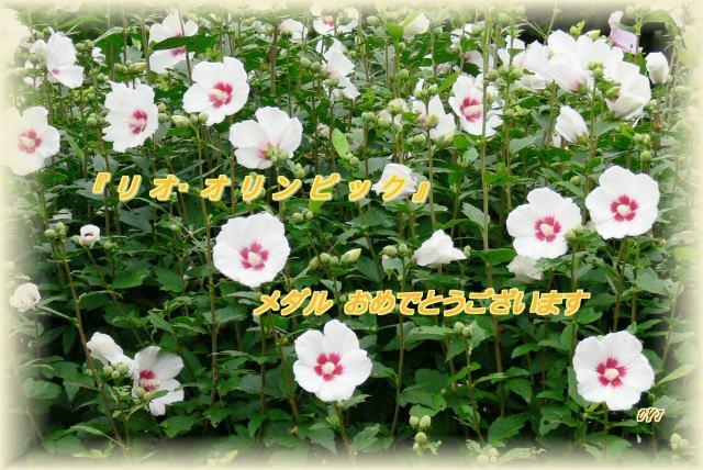 f0166871_1443341.jpg