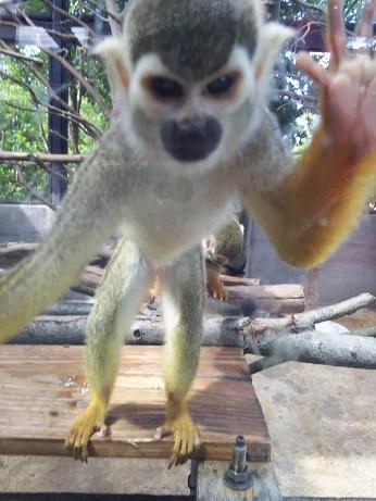 いしかわ動物園。_a0045293_183337.jpg