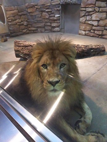 いしかわ動物園。_a0045293_183485.jpg