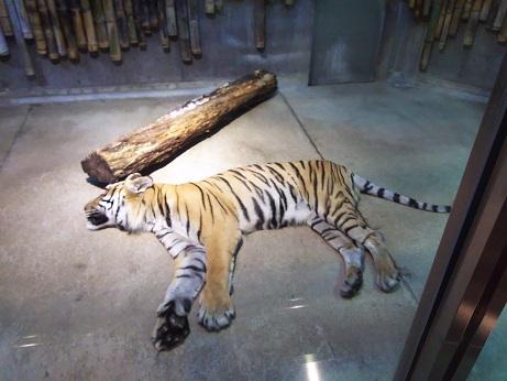 いしかわ動物園。_a0045293_1842022.jpg
