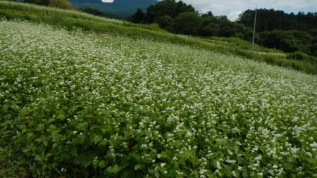 蕎麦の花盛り_e0120896_07175758.jpg