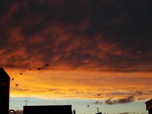 夕焼け小焼けで日が暮れて_f0316507_21043524.jpg