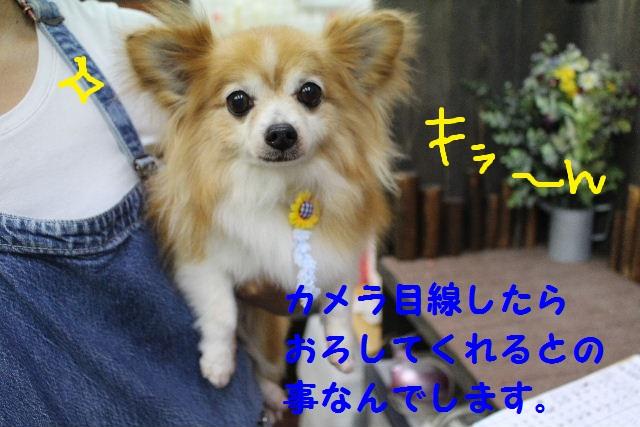 b0130018_8145916.jpg