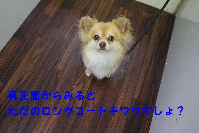 b0130018_8174798.jpg