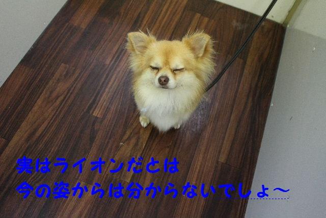 b0130018_817575.jpg