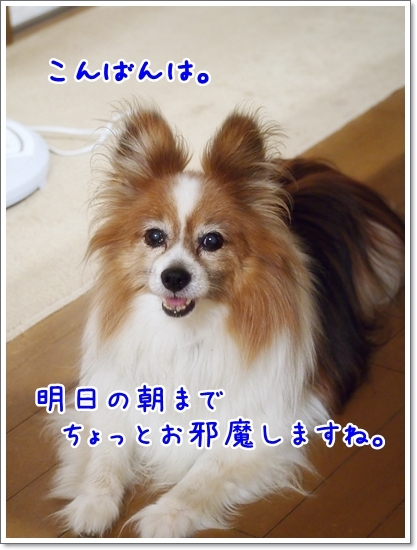 d0013149_22334227.jpg