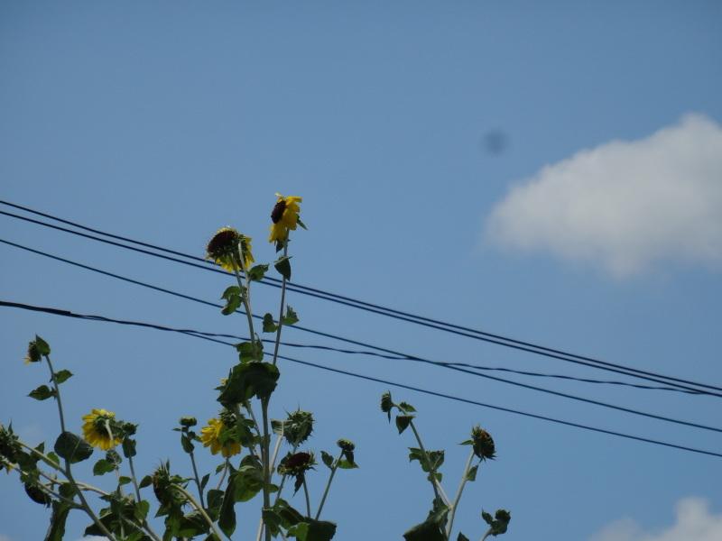 秋になれば 畑作業_c0108460_16463135.jpg