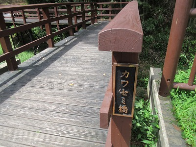 カワセミ公園(那珂川市)_a0093965_17142694.jpg