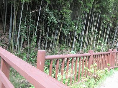カワセミ公園(那珂川市)_a0093965_1738092.jpg