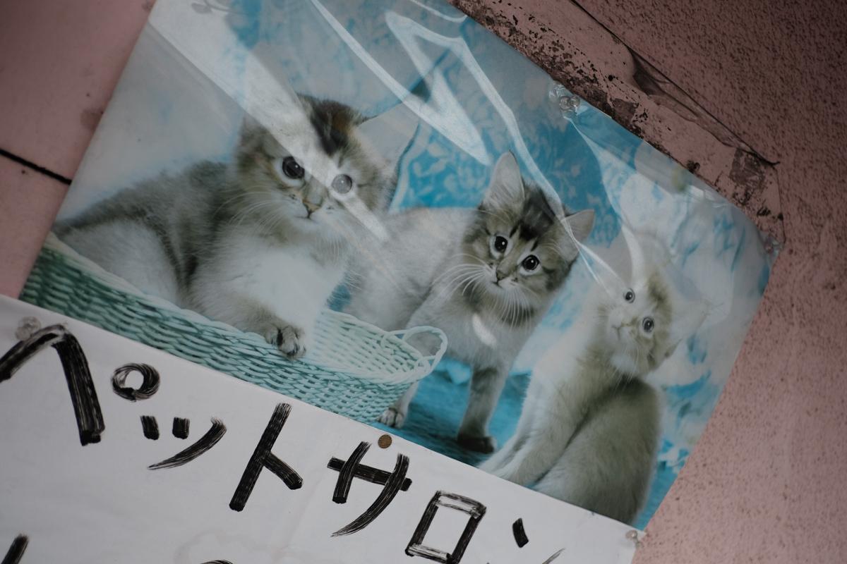 小江戸にて時代を拾うの巻~Ⅳ_c0084666_22023382.jpg