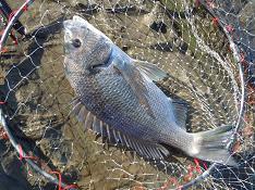 今日もイメージを釣りに・・・005 臨機応変学習の風_c0121570_1130591.jpg