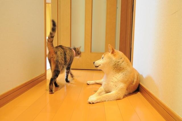 子猫の気配_a0126590_23262845.jpg