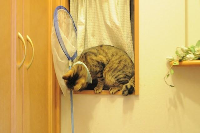 子猫の気配_a0126590_23263641.jpg