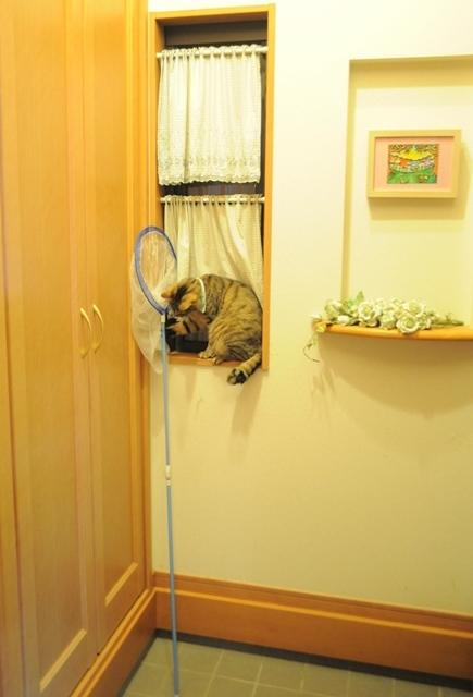 子猫の気配_a0126590_23264437.jpg