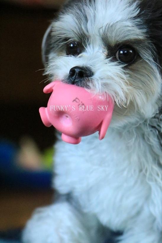 「持ってきたよ~♪」な飛行犬? (+動画)_c0145250_11105778.jpg