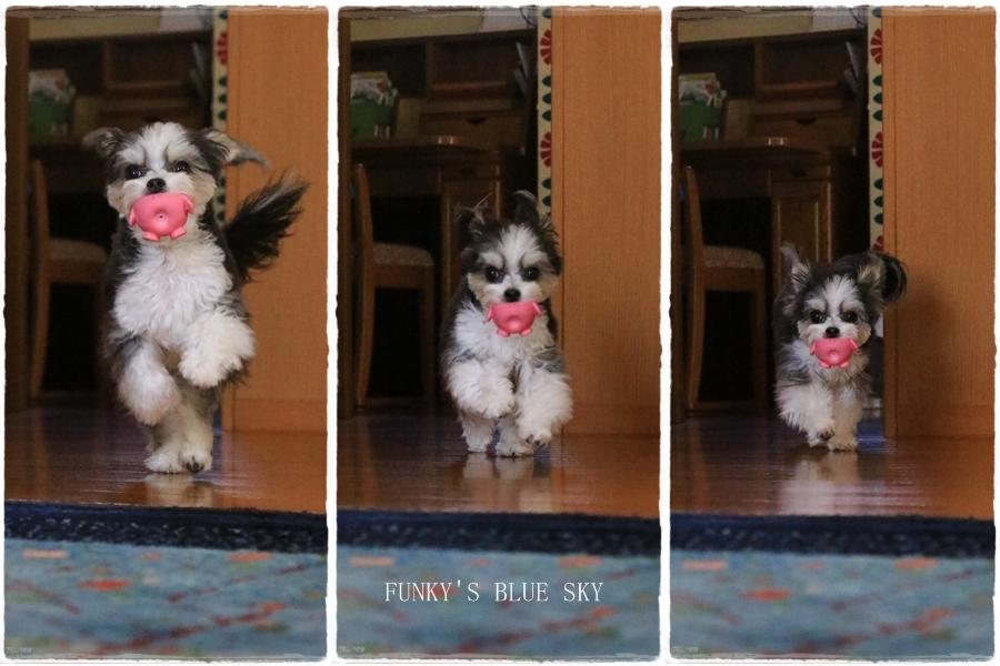 「持ってきたよ~♪」な飛行犬? (+動画)_c0145250_11112294.jpg