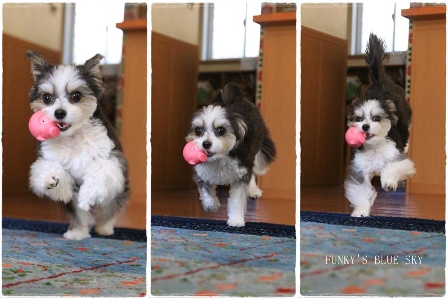 「持ってきたよ~♪」な飛行犬? (+動画)_c0145250_11114799.jpg